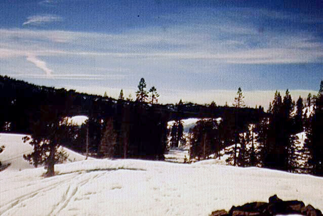 Photograph of snow-covered forest